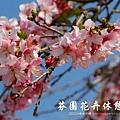 芬園花卉休憩園區 (7)