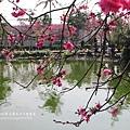 芬園花卉休憩園區 (34)