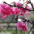 芬園花卉休憩園區 (35)