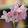 芬園花卉休憩園區 (43)
