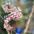 芬園花卉休憩園區 (54)