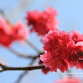 芬園花卉休憩園區 (66)
