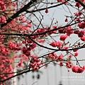 芬園花卉休憩園區 (62)