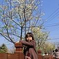 芬園花卉休憩園區 (79)