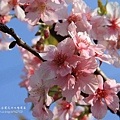 芬園花卉休憩園區 (93)
