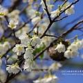 芬園花卉休憩園區 (98)