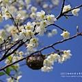 芬園花卉休憩園區 (99)