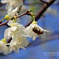 芬園花卉休憩園區 (101)