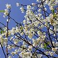 芬園花卉休憩園區 (100)
