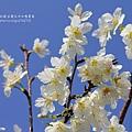 芬園花卉休憩園區 (121)