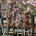 芬園花卉休憩園區 (127)