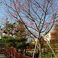 芬園花卉休憩園區 (129)