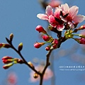 芬園花卉休憩園區 (133)