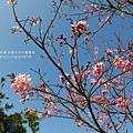 芬園花卉休憩園區 (132)