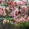 芬園花卉休憩園區 (136)