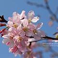 芬園花卉休憩園區 (134)