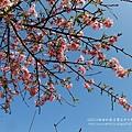芬園花卉休憩園區 (145)
