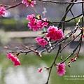 芬園花卉休憩園區 (137)