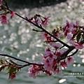 芬園花卉休憩園區 (149)
