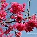 芬園花卉休憩園區 (148)