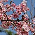 芬園花卉休憩園區 (163)