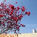 芬園花卉休憩園區 (159)