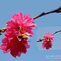 芬園花卉休憩園區 (160)