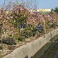 芬園花卉休憩園區 (180)