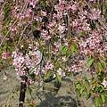 芬園花卉休憩園區 (181)