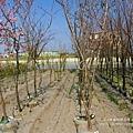 芬園花卉休憩園區 (184)