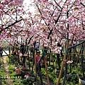 芬園花卉休憩園區 (194)
