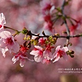 芬園花卉休憩園區 (190)