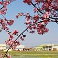 芬園花卉休憩園區 (200)