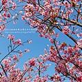 芬園花卉休憩園區 (201)