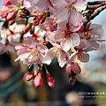 芬園花卉休憩園區 (205)