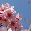 芬園花卉休憩園區 (203)