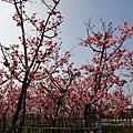 芬園花卉休憩園區 (209)