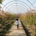 芬園花卉休憩園區 (217)