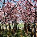 芬園花卉休憩園區 (214)