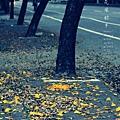 黃金風鈴木 (65)
