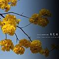 黃金風鈴木 (87)