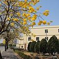 黃金風鈴木 (84)