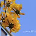 黃金風鈴木 (105)