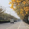 黃金風鈴木 (125)