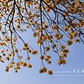 黃金風鈴木 (134)