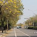 黃金風鈴木 (156)