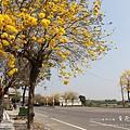 黃金風鈴木 (169)