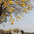黃金風鈴木 (178)