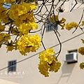 黃金風鈴木 (188)