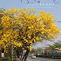 黃金風鈴木 (192)